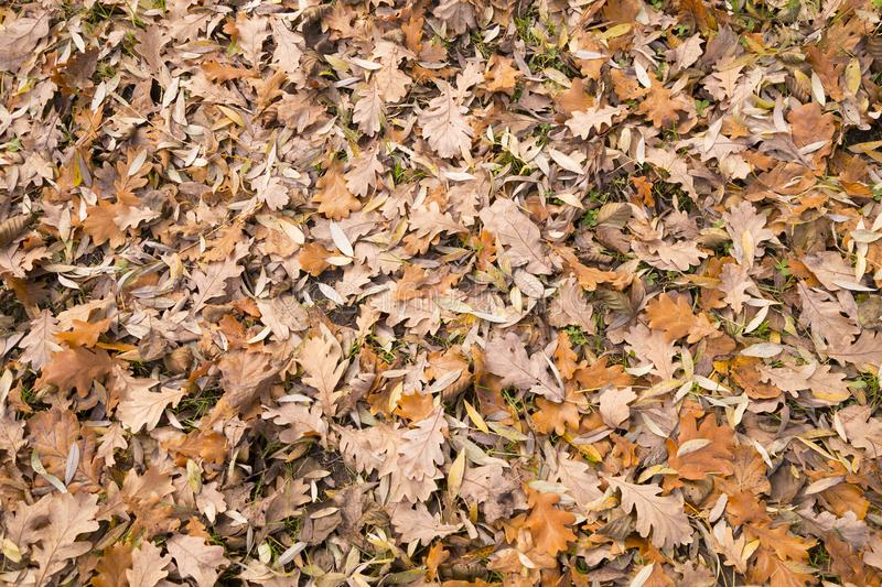 Natural leafy background. Fallen leaves of deciduous trees stock photo