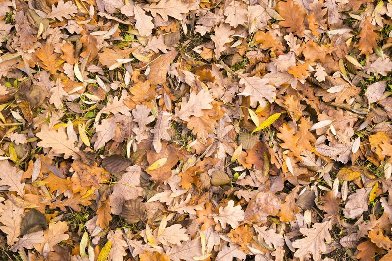 Natural leafy background. Fallen leaves of deciduous trees stock photography
