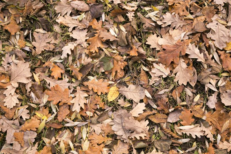 Natural leafy background. Fallen leaves of deciduous trees royalty free stock photos