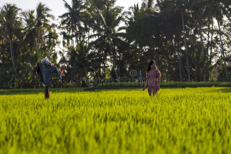Natural lifestyle portrait of young beautiful and happy Asian Chinese woman in elegant Summer dress walking carefree and relaxed. At fresh tropical rice field royalty free stock photos