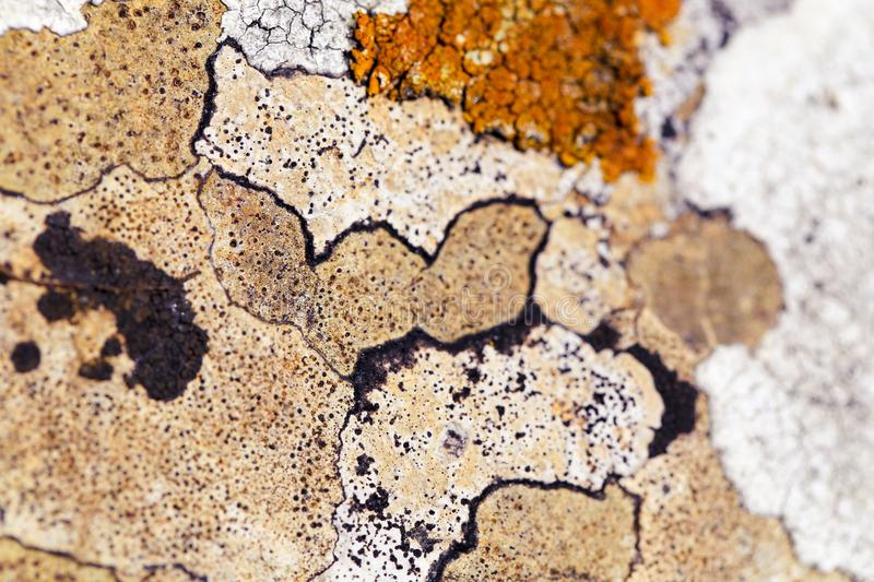Natural limestone rock texture pattern with lichen. Macro photo of ancient natural limestone rock in the Cotswolds with orange organic lichen growth, surface stock photography
