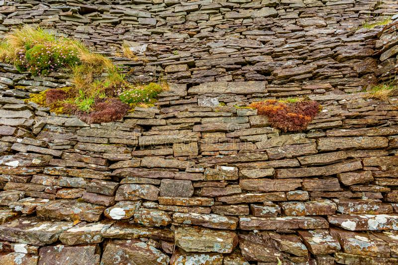 Natural limestone wall with plants between the stones in the burren. Limestone texture, geosites and geopark, spring day in the countryside in county Clare in royalty free stock photo