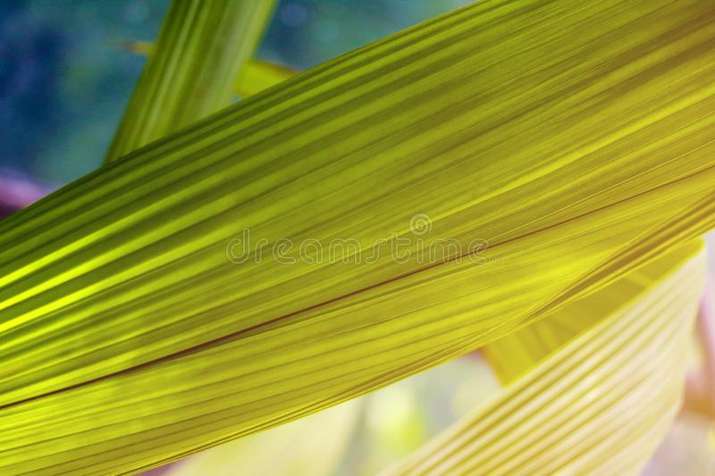 Natural macro photo with tropical green leaf fragment. Wide composition with copy space area royalty free stock image