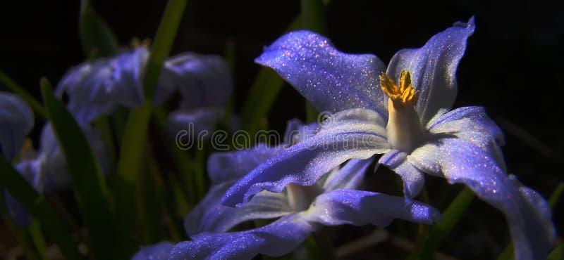 Natural magic flower stock photos