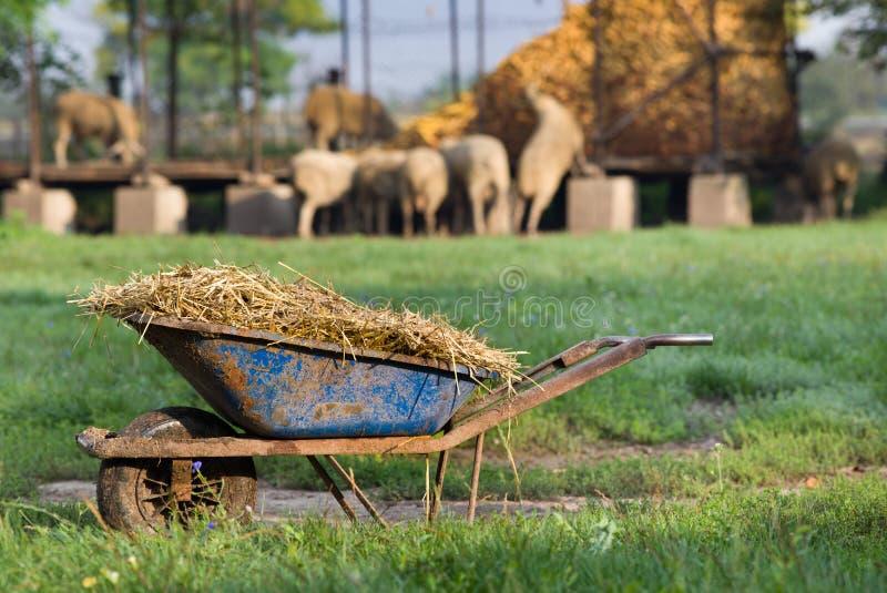Natural manure stock photos