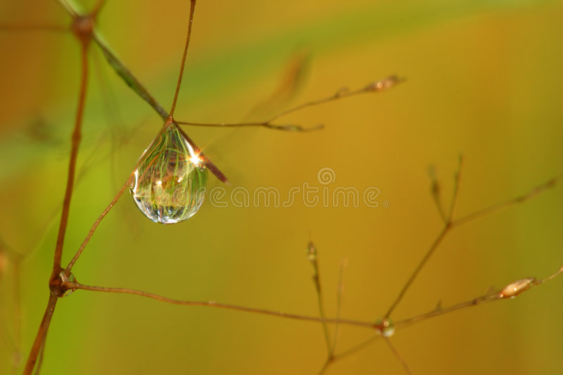 Natural mirror in drop. Of the water royalty free stock photo