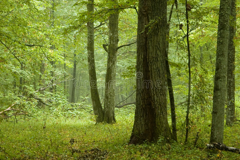 Natural mixed forest after rain royalty free stock photos