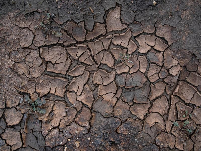Natural mosaic formed by cracks in dry soil. Dead nature. Background and texture. Natural mosaic formed by cracks in dry soil. Dead nature. Background and stock photos