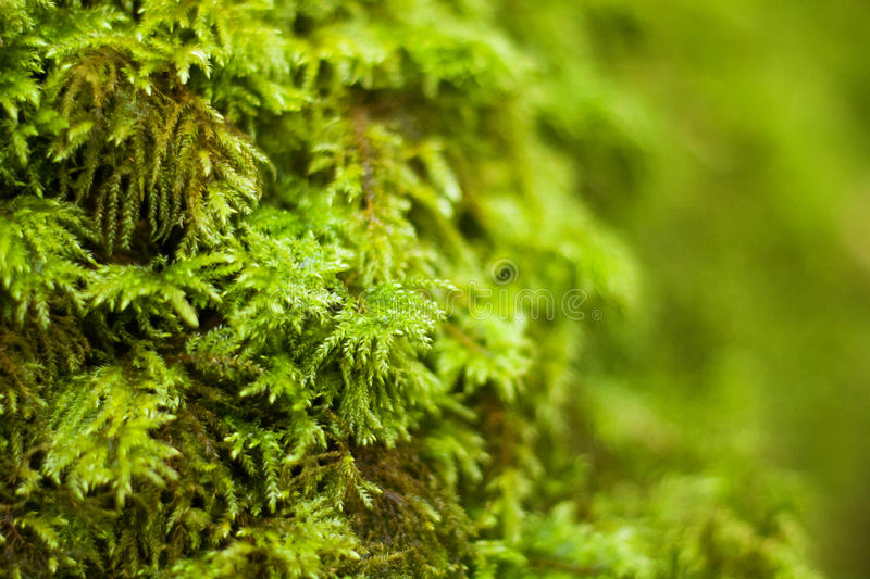 Natural moss stock images