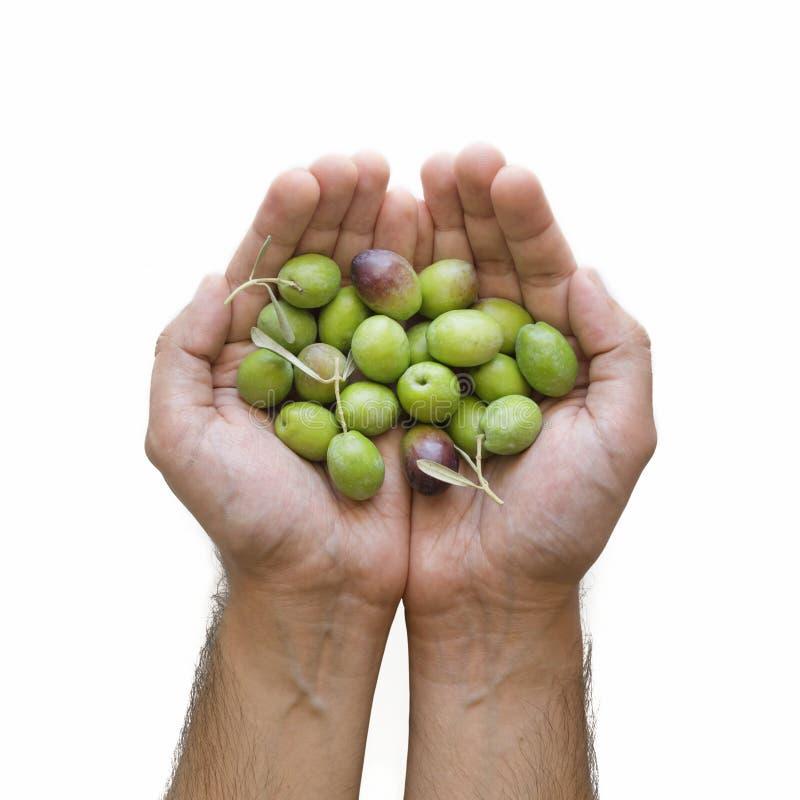 Natural Olives stock images