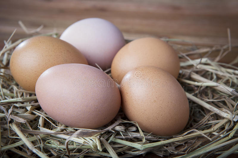 Natural organic eggs on chicken hatching nest royalty free stock photos