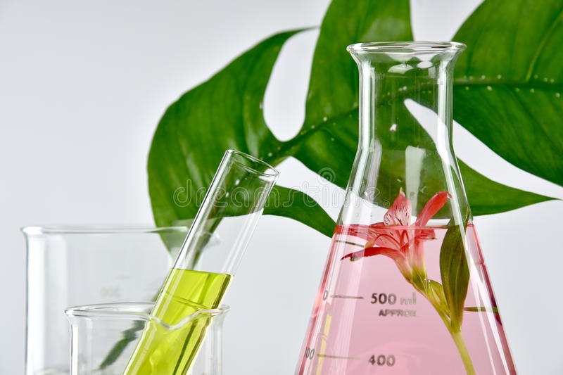 Natural organic extraction and green herbal leaves, Flower aroma essence solution stock photo