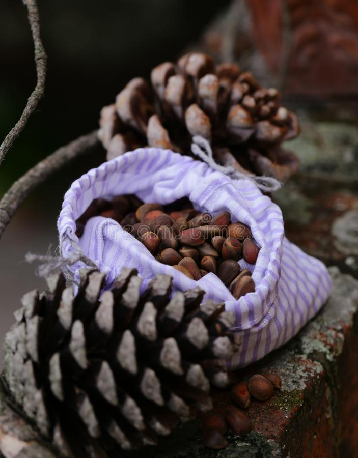 Organic pine cones and nuts stock images
