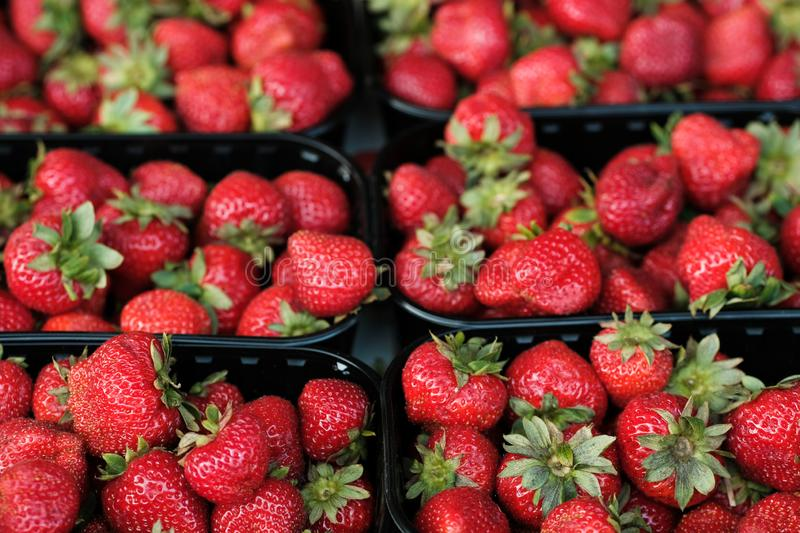 Natural organic strawberries in boxes at a farmers market stock photography