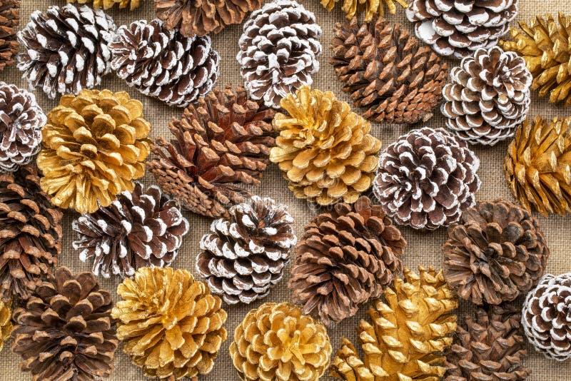 Natural, oro y conos escarchados del pino blanco imagen de archivo libre de regalías