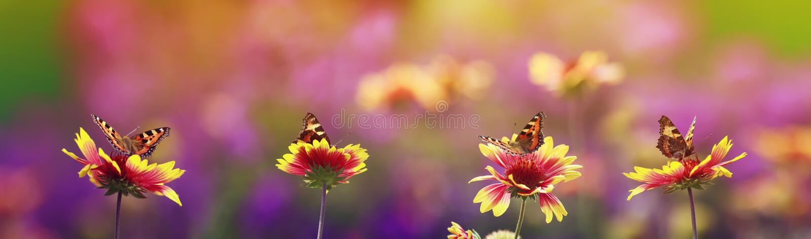 Panoramic background with bright butterflies sit in a row on flowers in a Sunny summer garden. Natural panoramic background with bright butterflies sit in a row royalty free stock photography