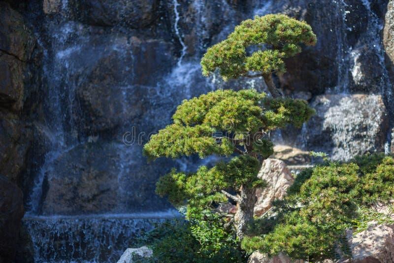 Natural park backgorund, fresh green spring bacground stock images