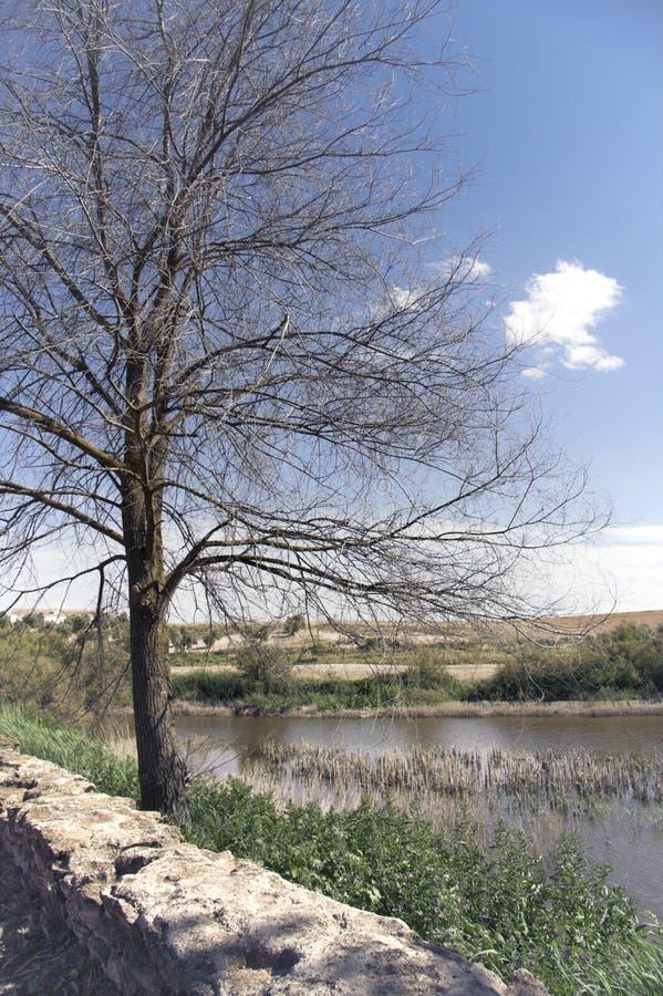 Download Natural Park Tablas De Daimiel In Spain Stock Image - Image: 11598877