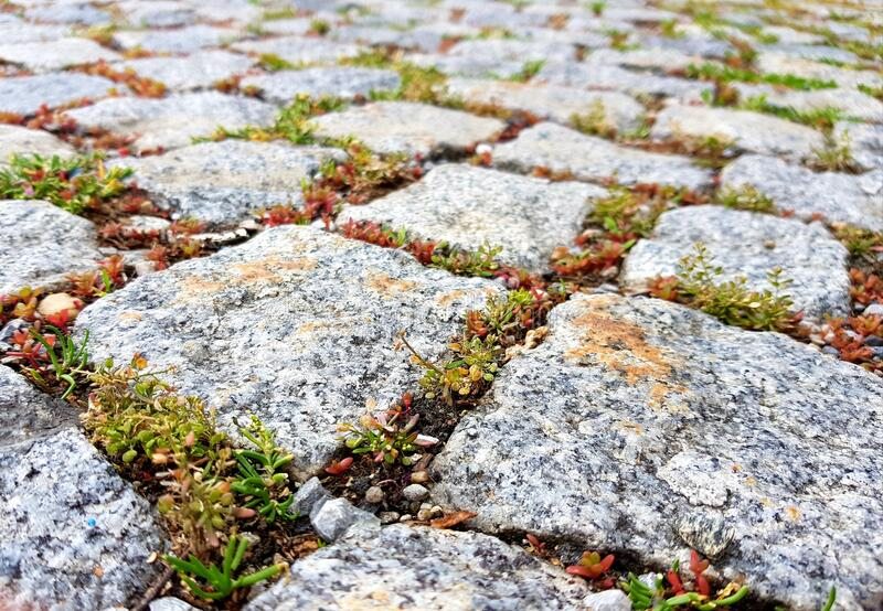 Natural path with stones and plants. royalty free stock images