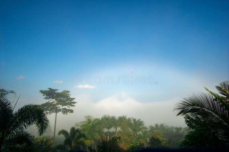 Natural phenomena. Fogbow or White rainbow occurs above the  mist. Natural phenomena. Fogbow or White rainbow occurs above the mist stock photo