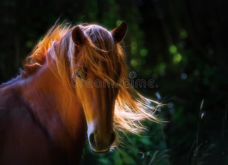 Horse in the nature royalty free stock photography