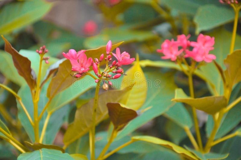 Natural photography. In india& x27;s best city hisar royalty free stock photo