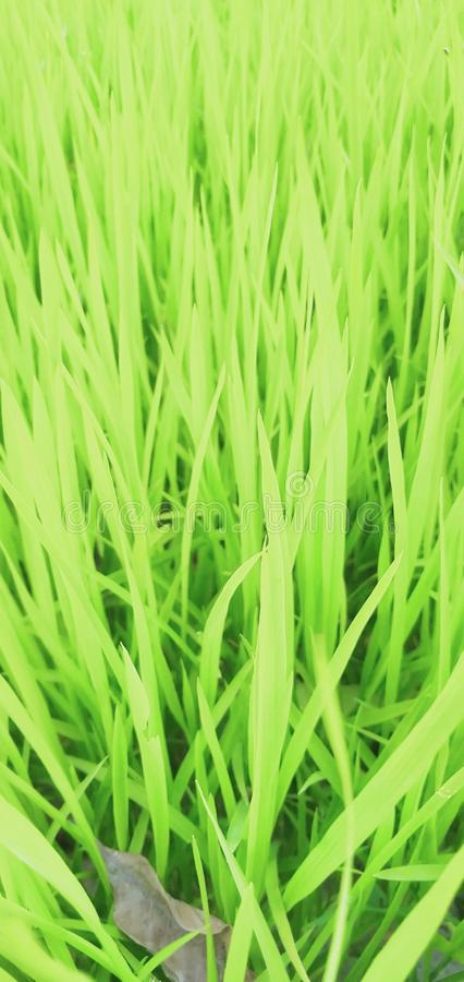 Natural photos of Indian field stock images