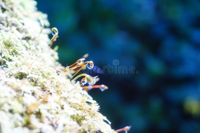 Download Natural Plant In Chiang Mai Stock Photo - Image of natural, nature: 83700088