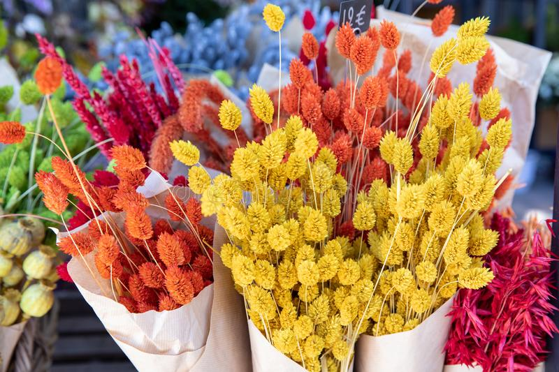 Natural plant dried flowers home decoration eternal flower bouquets with a floral grass with multicolored gems flores stock image