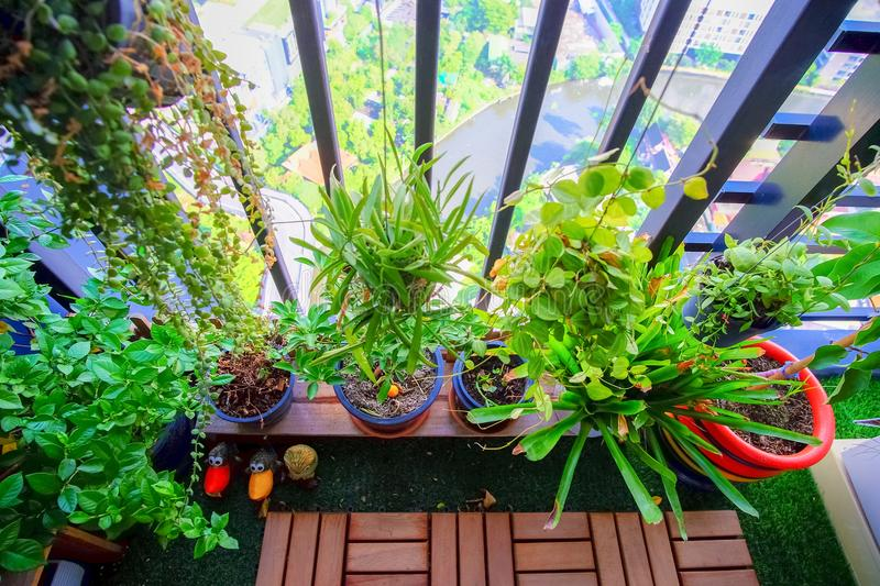 Natural plants in the hanging pots at balcony garden stock images