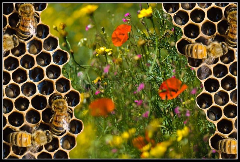 Download Natural pure honey stock photo. Image of food, beekeeping - 14124088