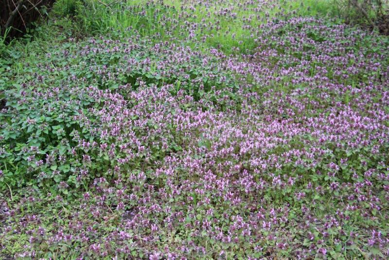 Natural puro Plantas novas verdes e frescas com flores selvagens fotografia de stock