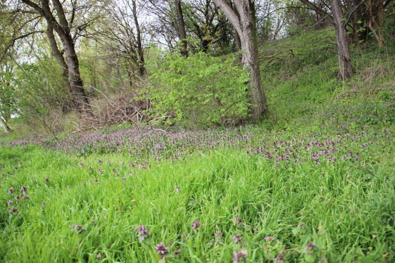 Natural puro quieto Plantas novas e Floewrs selvagem foto de stock royalty free