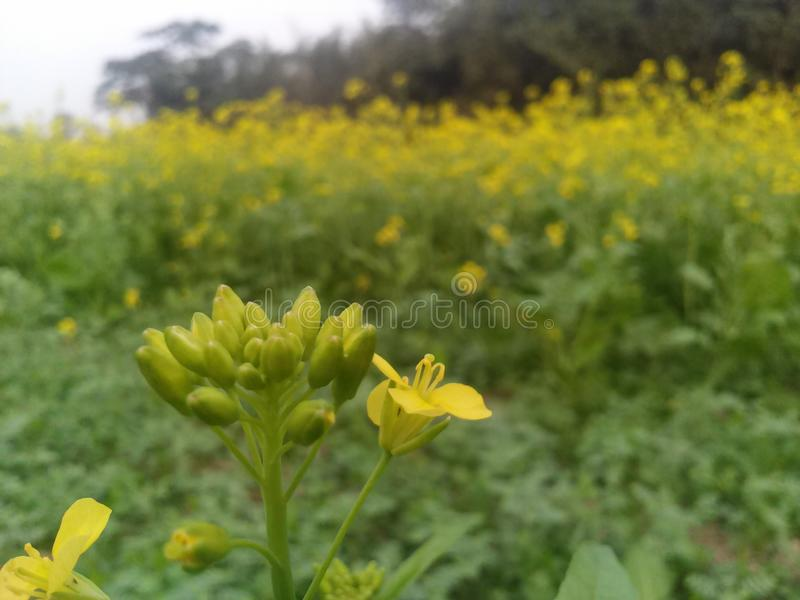 Natural real flower in the field. Capture by me by smart phone stock photography