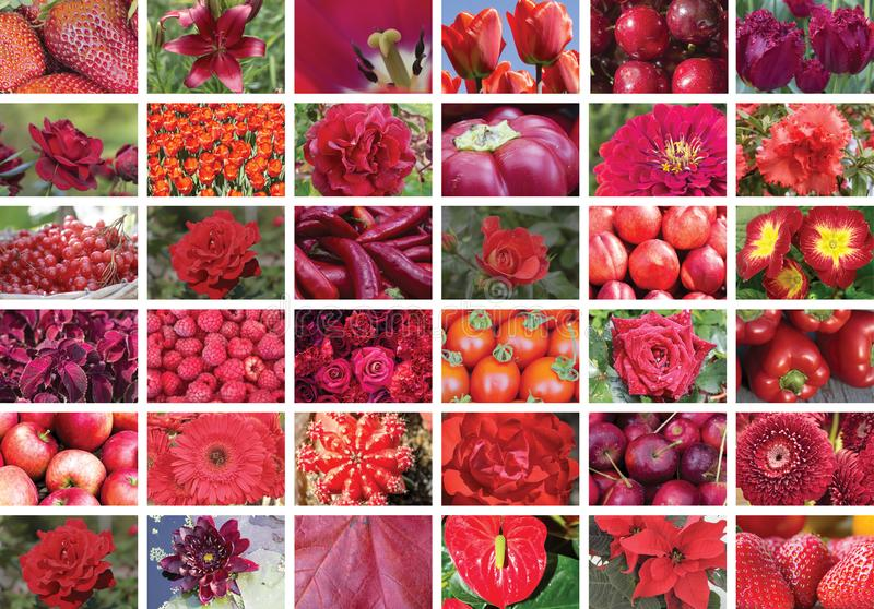 Natural red collage of plants, horizontal. Natural red collage of plants, thirty-six elements, horizontal. Red color in nature: flowers, fruits, plants, leaves royalty free stock photos