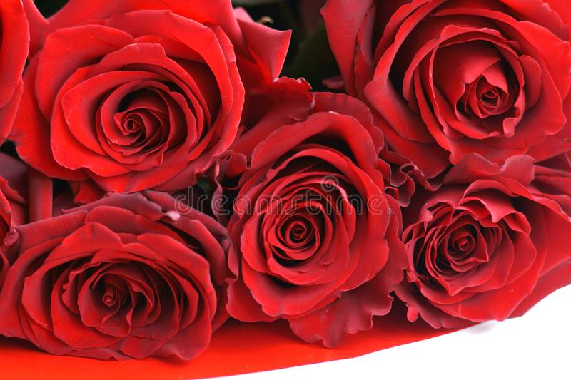 Natural red roses background stock photo
