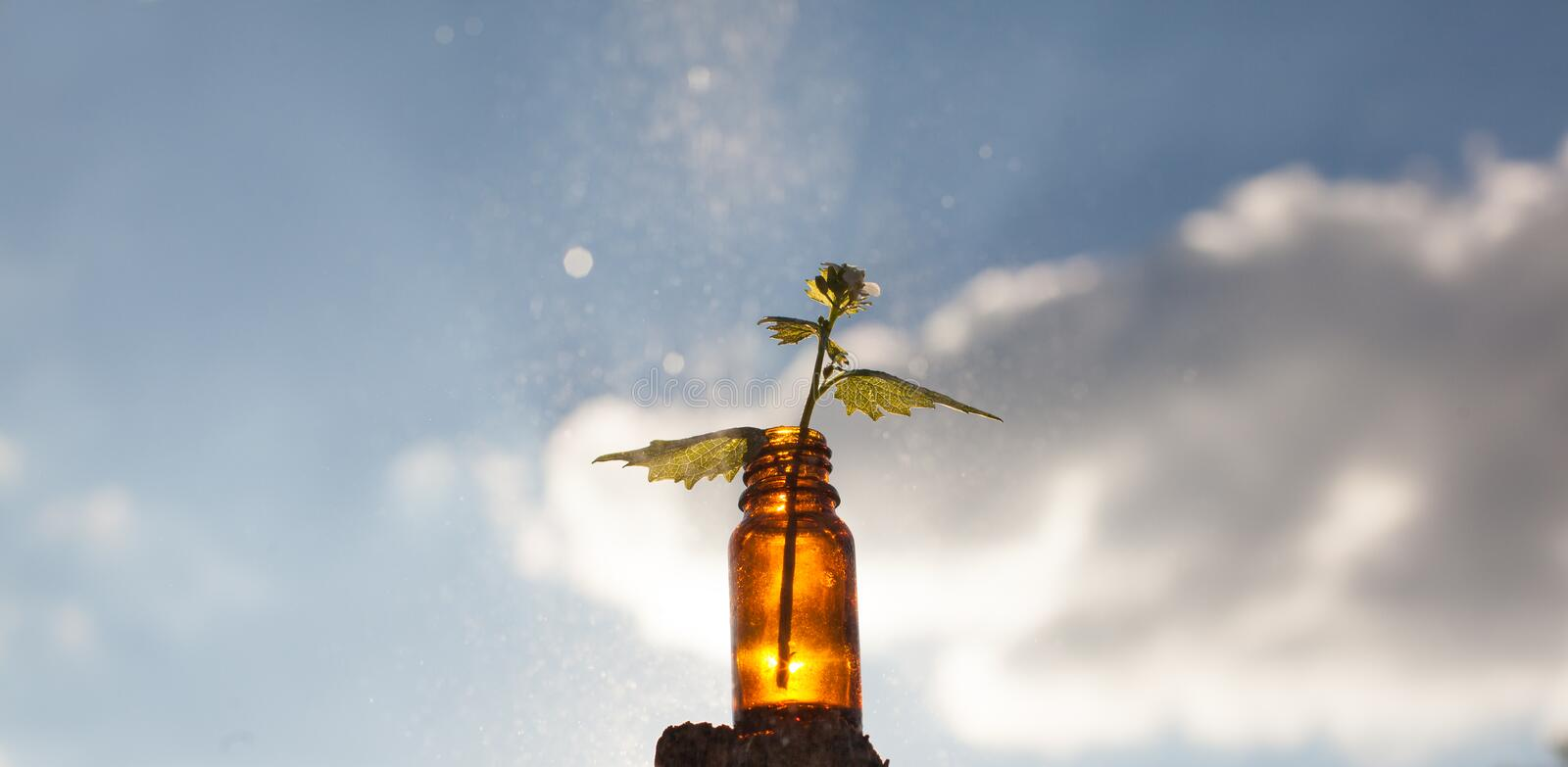 Natural remedies - Herb Therapy. Dark glass bottles with pure aroma oil royalty free stock photo