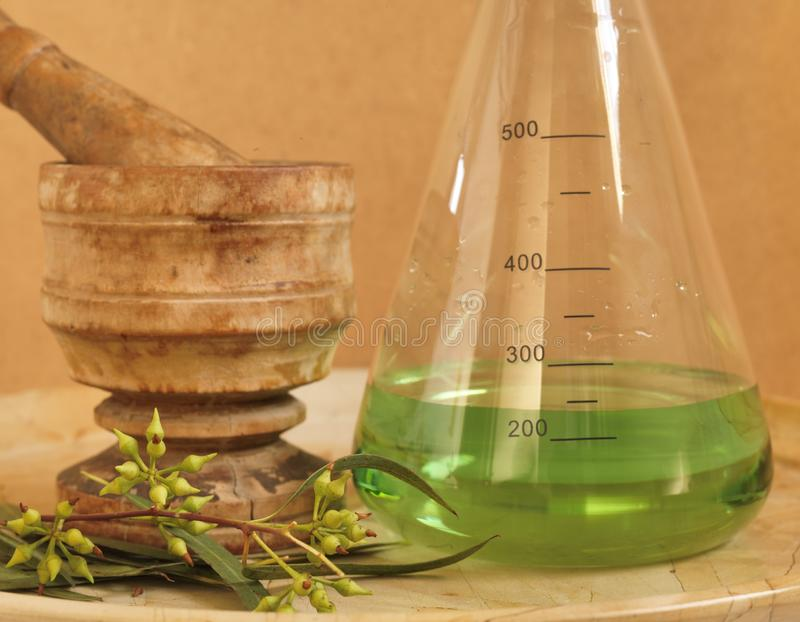Natural Remedy of Eucalyptus Plant. Dissolved in Erlenmeyer flask with mortar and pestle stock photo