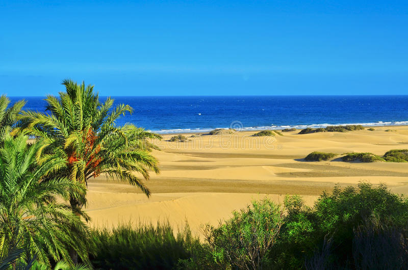 Natural Reserve of Dunes of Maspalomas, in Gran Canaria, Spain. A view of the Natural Reserve of Dunes of Maspalomas, in Gran Canaria, Canary Islands, Spain royalty free stock photo