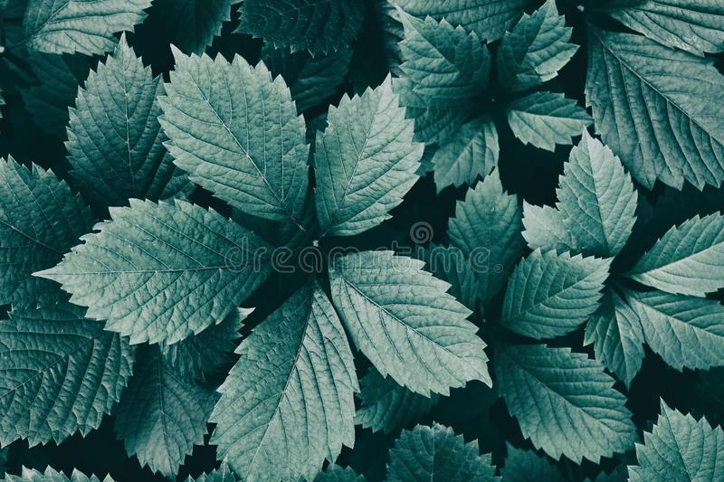 Natural retro nostalgia background. Dark green leaves close-up. Nature vintage wallpapers royalty free stock photography