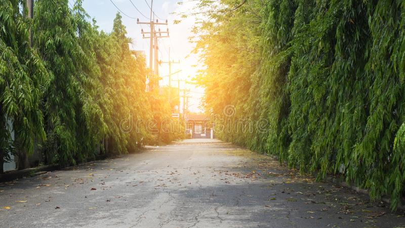 Natural Road and sun. Background stock photography