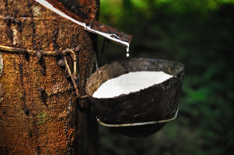 Natural Rubber royalty free stock images
