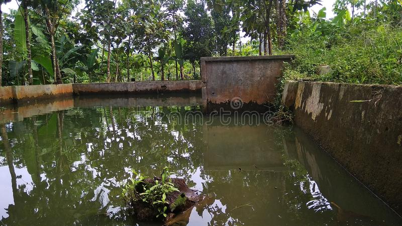 Natural scenery, fish ponds and gardens royalty free stock photography