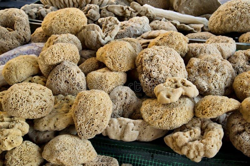 Natural sea sponge royalty free stock photo