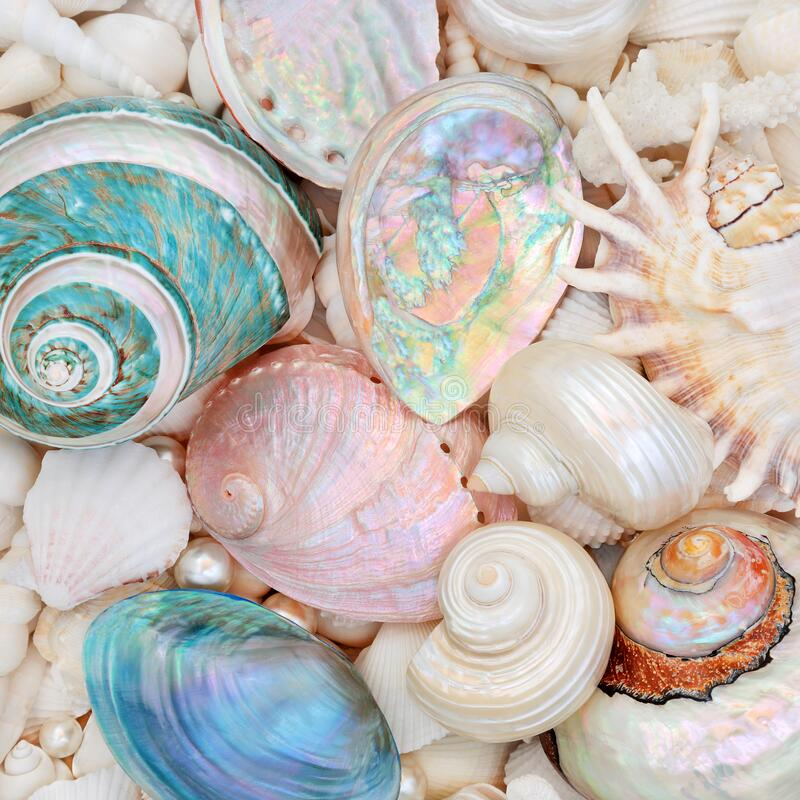 Free Natural Seashell Beauty With Mother Of Pearl Shells Royalty Free Stock Images - 174598629