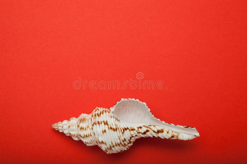 Natural seashell on a red background. Empty space for text royalty free illustration