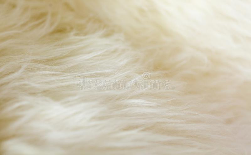 Natural sheepskin fluffy fur rug extreme macro background. Horizontal close up crop, low angle view stock image