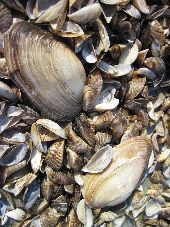 Natural shells pattern stock images
