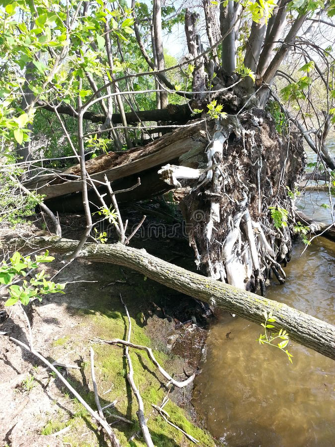 Natural shelter. Lake Ontario Sackets harbour NY Bedford Creek campground royalty free stock photos