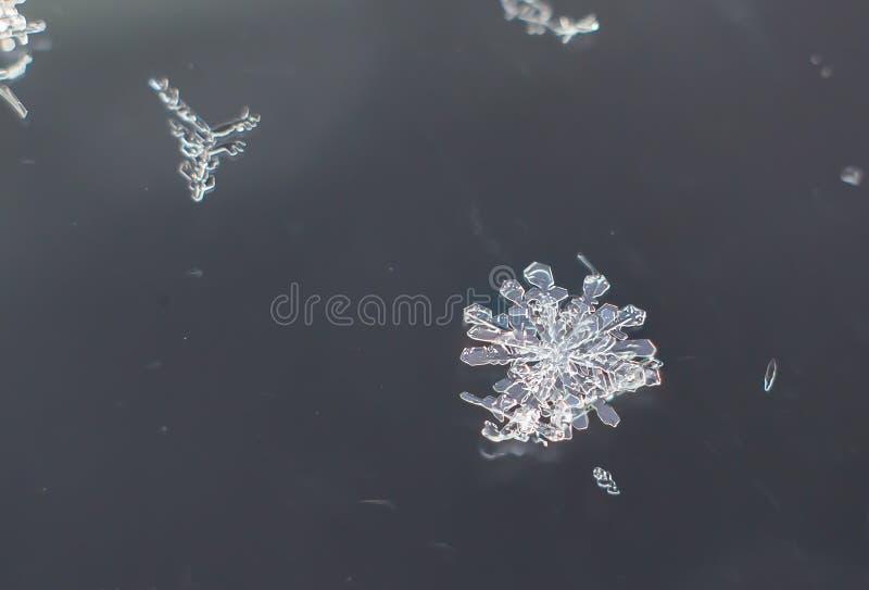 Snowflake Natural Extreme Macro stock photography